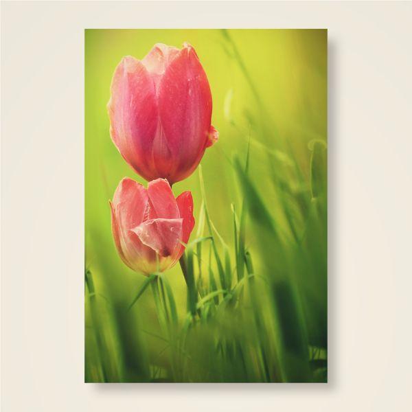Grusskarten Set 'Tulpe'