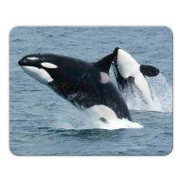 Mousepad 'Orca'