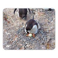 Mousepad 'Pinguin'